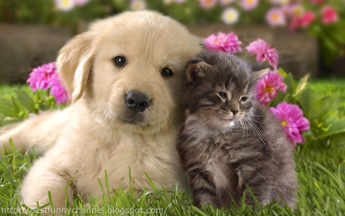 1200x750 - Cute Puppy and Kitten 8