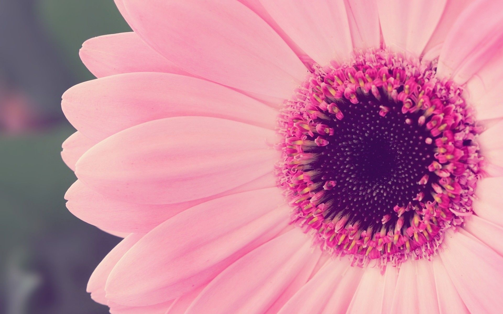 Pretty Pink Background 53 Images Dodowallpaper
