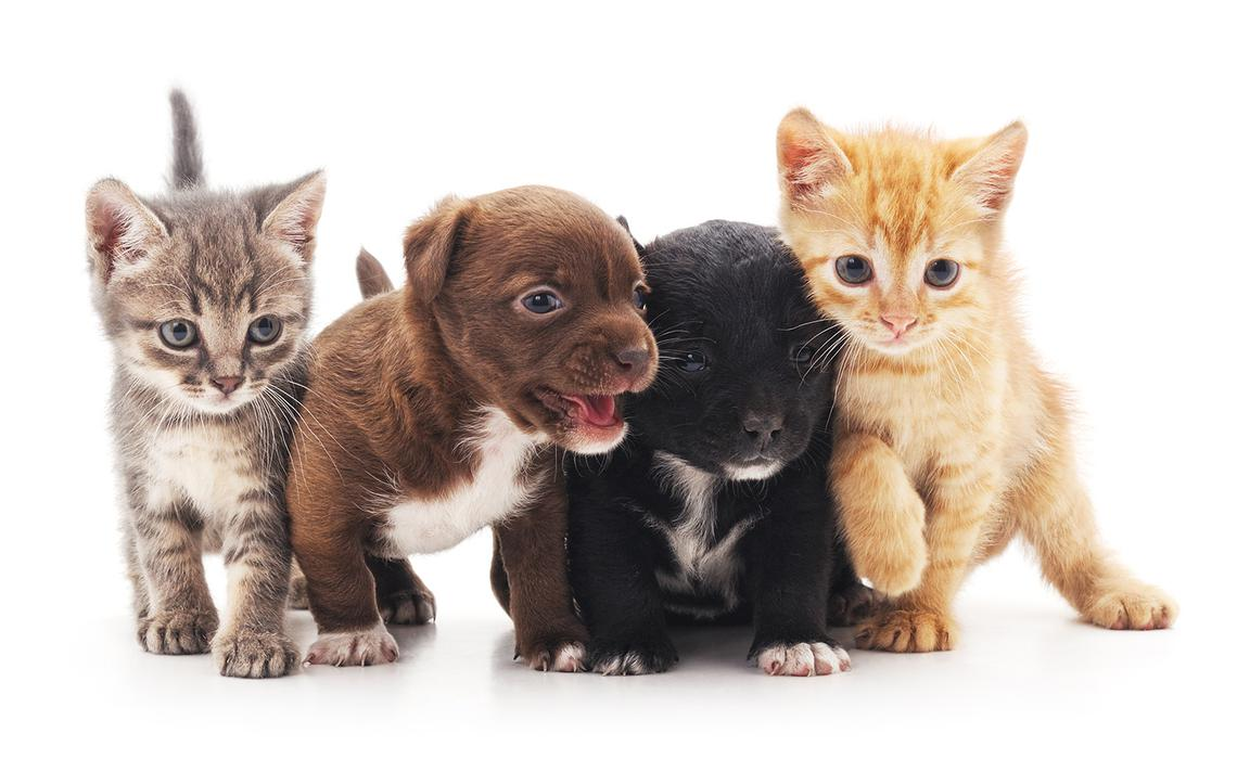 1140x712 - Cute Puppy and Kitten 3