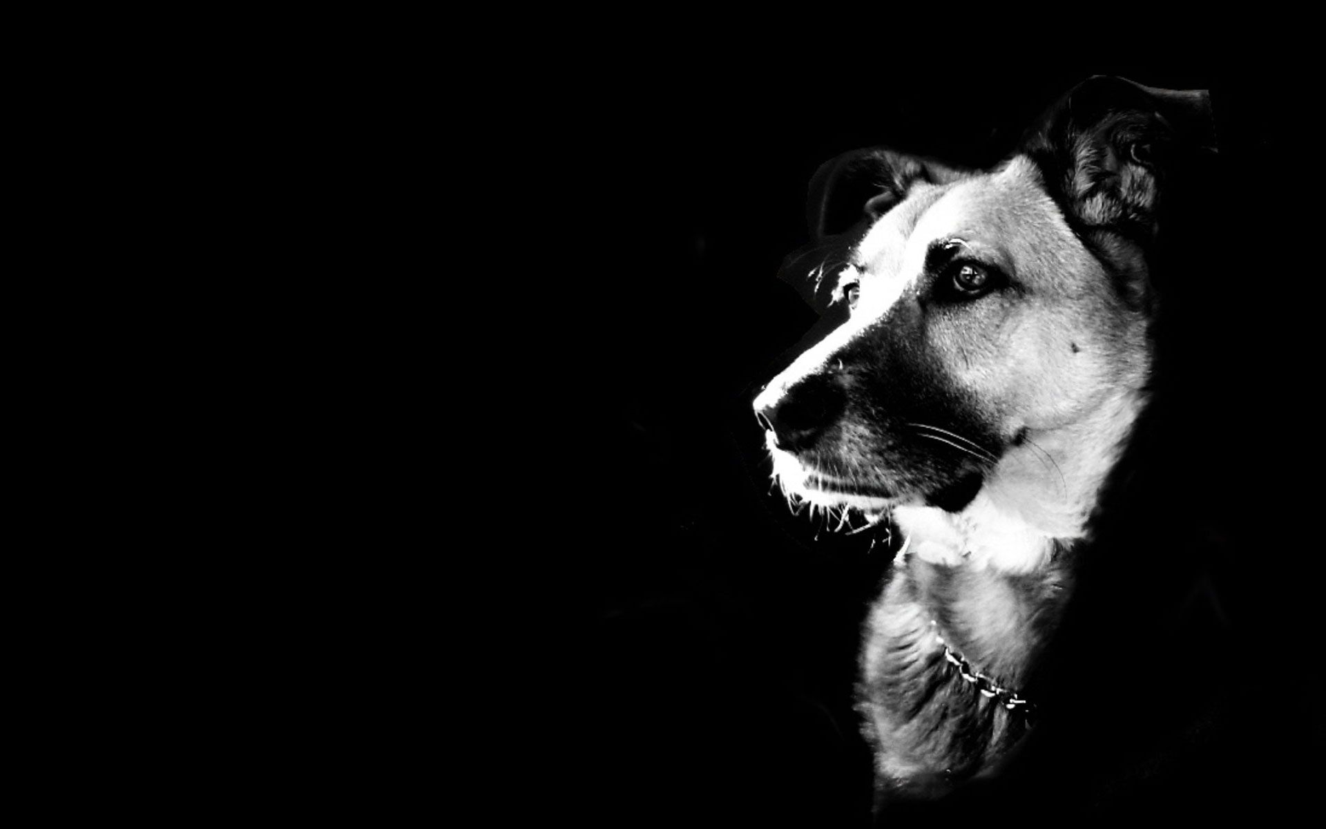 1920x1200 - Wallpaper Dogs Black and White 1