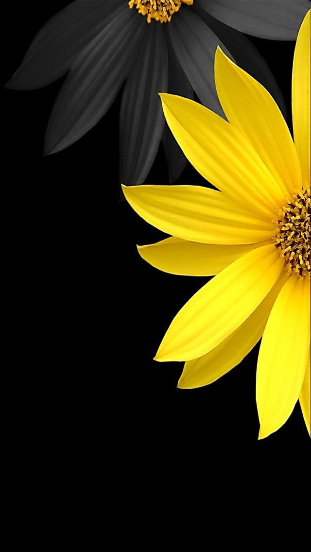640x1136 - Yellow and Black 29