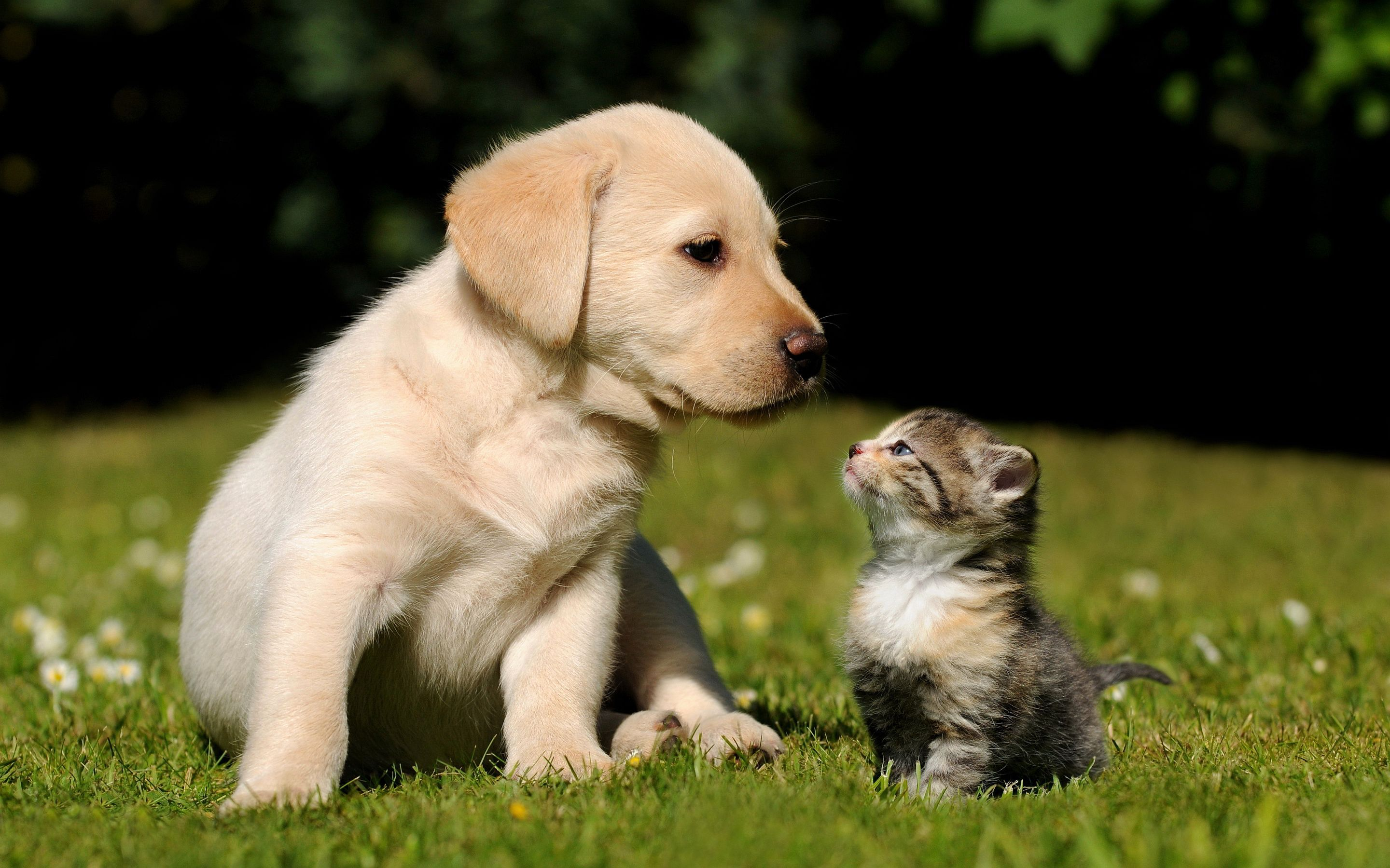 2880x1800 - Cute Puppy and Kitten 32