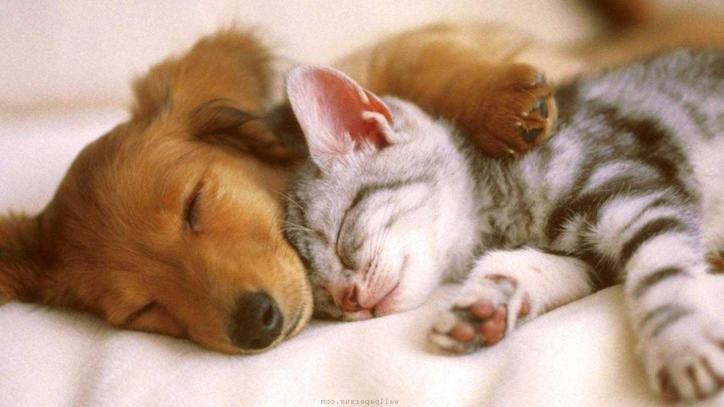1440x810 - Cute Puppy and Kitten 12