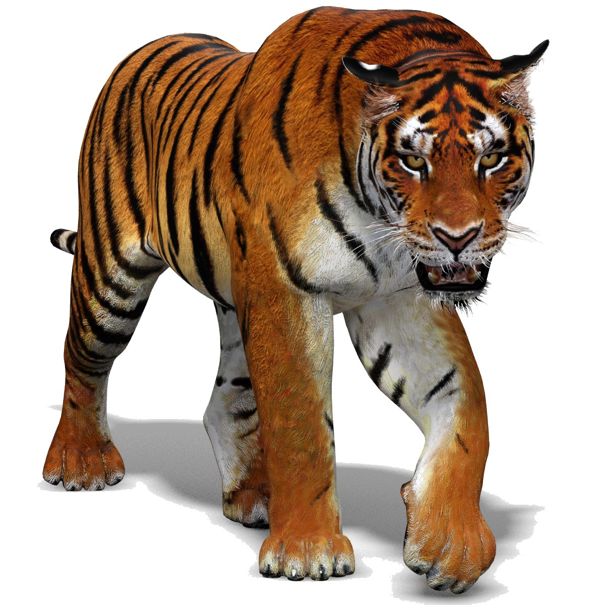1200x1200 - Animated Tiger 7