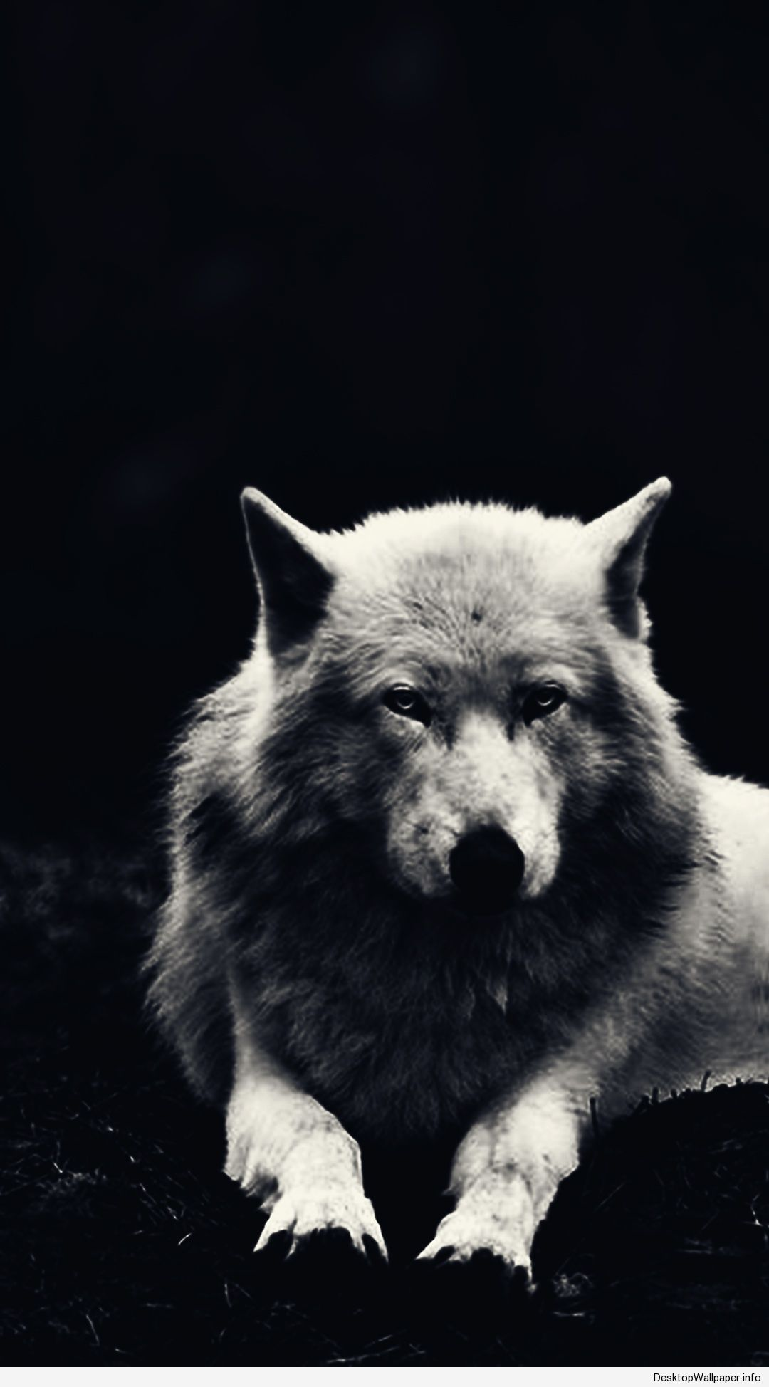 Wolf Wallpapers 24 Images Dodowallpaper