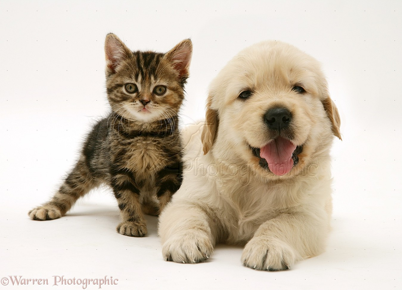 1349x972 - Cute Puppy and Kitten 40