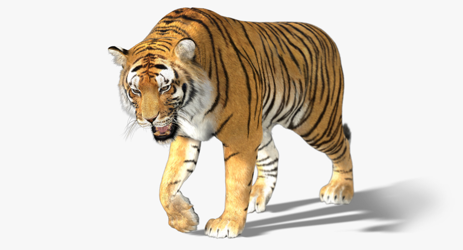 1480x800 - Animated Tiger 34