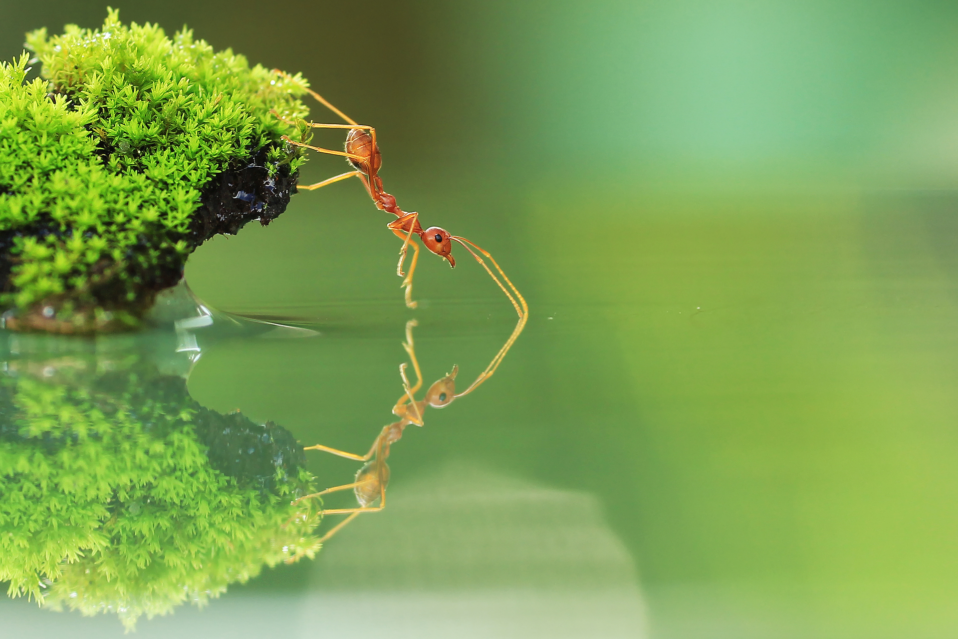 1920x1280 - Ant Wallpapers 12