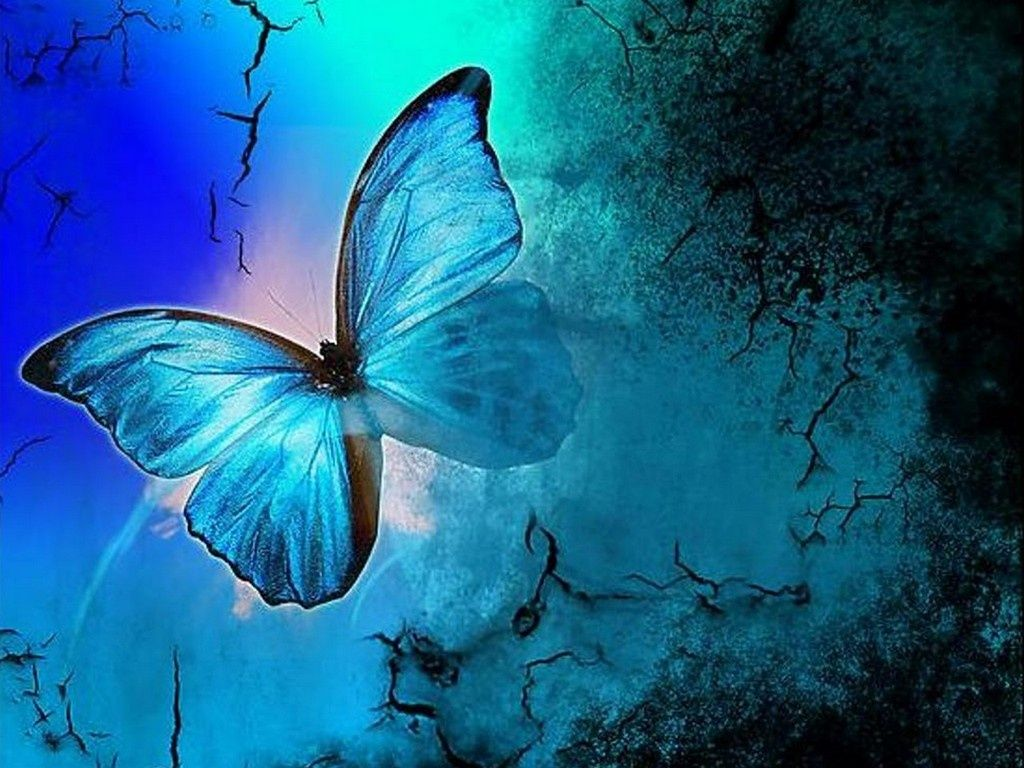 1024x768 - Pretty Butterfly Backgrounds 39