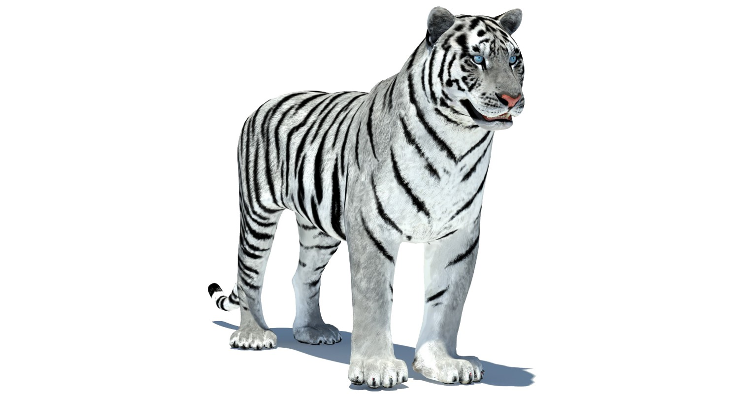 1480x800 - Animated Tiger 22