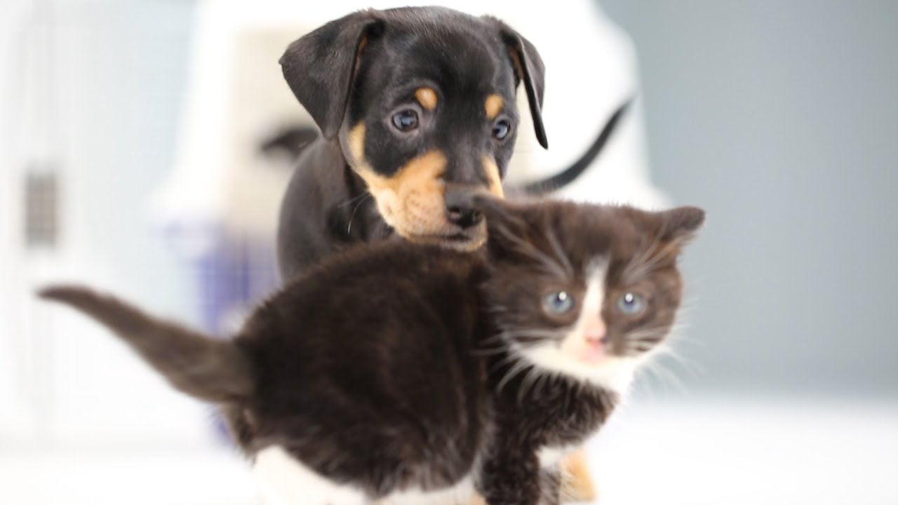 1280x720 - Cute Puppy and Kitten 35