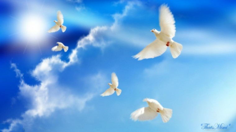 Peace Dove Wallpapers