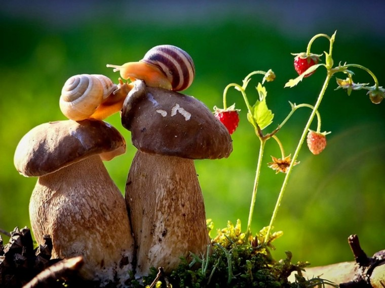 Snail Wallpapers