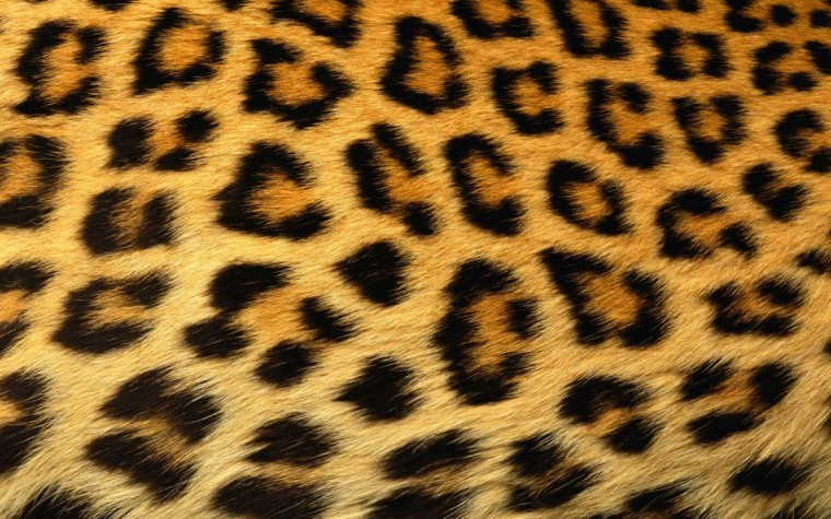 Leopard Skin Wallpapers