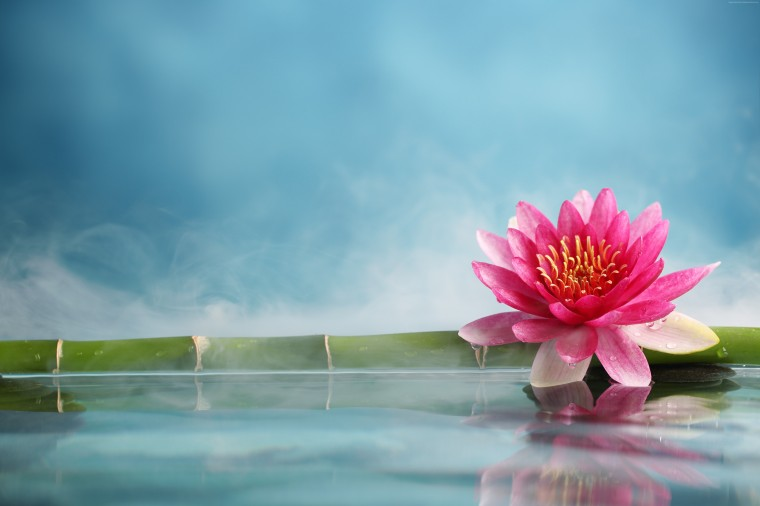 Lotus Wallpapers