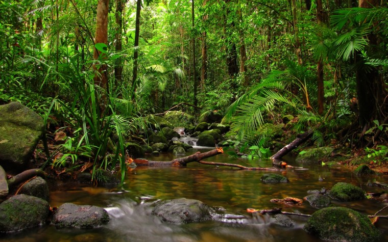 Daintree Rainforest Wallpapers