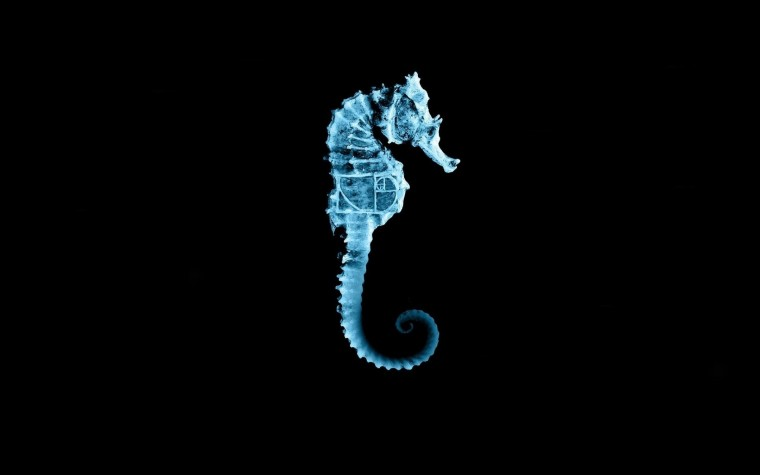 Seahorse Wallpapers