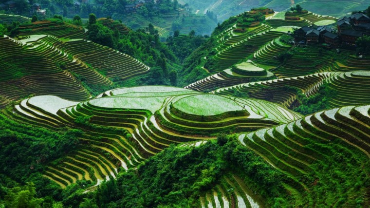 Rice Terrace Wallpapers